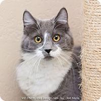 Adopt A Pet :: Kaitlyn - Fountain Hills, AZ