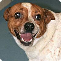 Adopt A Pet :: Pete - Lufkin, TX