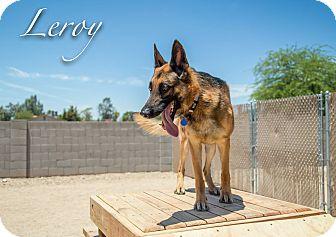 German Shepherd Dog Dog for adoption in Phoenix, Arizona - LEROY
