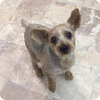 Adopt A Pet :: Grady - N. Babylon, NY