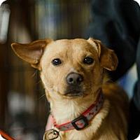 Adopt A Pet :: 💸Cash Money💸 - Milwaukee, WI