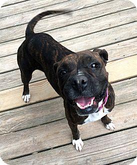 Boxer Mix Dog for adoption in San Jose, California - Adrian