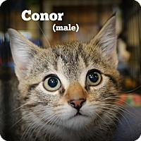 Adopt A Pet :: Conor - Springfield, PA