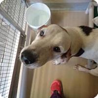 Adopt A Pet :: Stewart - St Augustine, FL