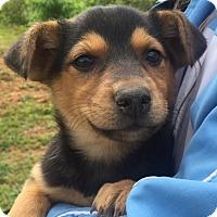 Adopt A Pet :: Rogue (6 lb) Video - Sussex, NJ