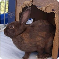 Adopt A Pet :: MALAIA - San Clemente, CA