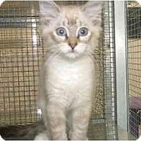 Adopt A Pet :: Marka - Winter Haven, FL