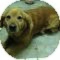 Adopt A Pet :: Rocky - Denver, CO