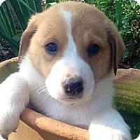 Adopt A Pet :: Brooklyn - Marlton, NJ
