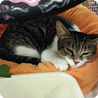 Adopt A Pet :: Collette - Chesapeake, VA