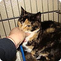 Adopt A Pet :: Lily & Rosemary - Chesapeake, VA