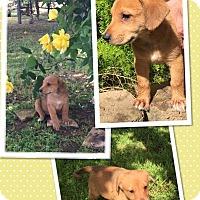 Adopt A Pet :: Catalina - Scottsdale, AZ