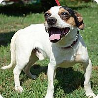 Adopt A Pet :: Duncan - Staunton, VA