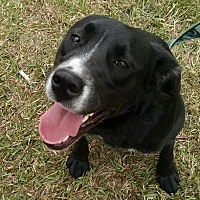 Adopt A Pet :: SADIE - Beaumont, TX