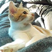 Adopt A Pet :: Rockey (TD) - Exton, PA