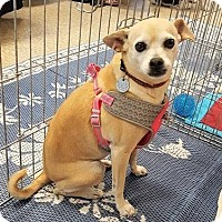 Adopt A Pet :: Annabelle - Surprise, AZ