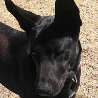 """Adopt A Pet :: Mora  """"Misty"""" - Santa Rosa, CA"""
