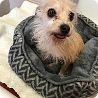 Adopt A Pet :: Fitzer *REBOUND* - Appleton, WI