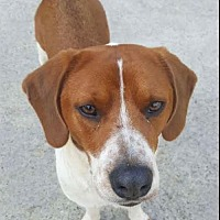 Adopt A Pet :: Copper - Winder, GA