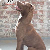 Adopt A Pet :: Kai - Columbus, OH