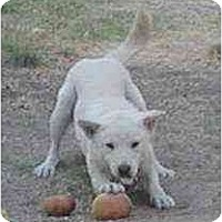 Adopt A Pet :: SimSoon - Southern California, CA
