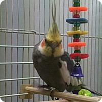 Adopt A Pet :: Kirby - Lenexa, KS