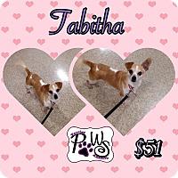 Adopt A Pet :: Tabitha - Fowler, CA