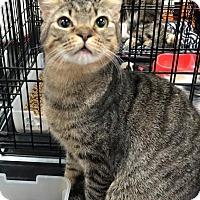 Adopt A Pet :: Piper - Harrisburg, NC