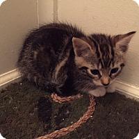 Adopt A Pet :: Cocoa - Piscataway, NJ