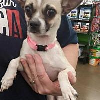 Adopt A Pet :: Sweetie - Fresno, CA