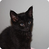 Adopt A Pet :: Onyx (LE) - Little Falls, NJ
