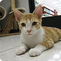 Adopt A Pet :: FRITO - Brea, CA