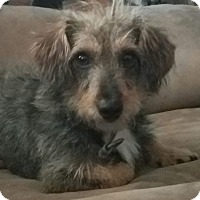 Adopt A Pet :: Camo - Ogden, UT