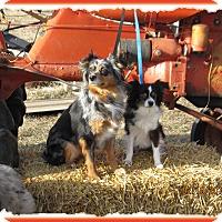 Adopt A Pet :: Asti - Parker, KS