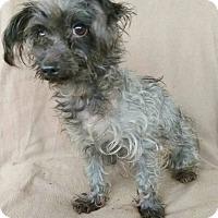 Adopt A Pet :: Ralfie - Lawrenceville, GA