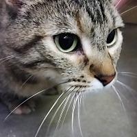 Adopt A Pet :: Angela - Jackson, MO