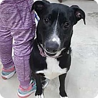 Adopt A Pet :: Harley (Needs Foster) - Washington, DC