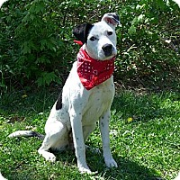 Adopt A Pet :: Twinkles - Mocksville, NC