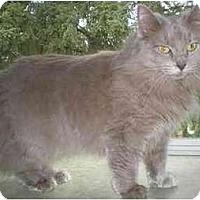 Adopt A Pet :: Grace - Portland, OR