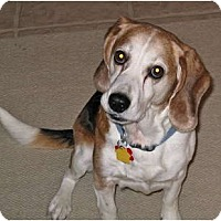 Adopt A Pet :: Herbie - Indianapolis, IN