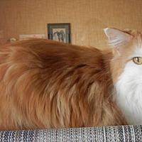 Adopt A Pet :: Zoey - Des Moines, IA