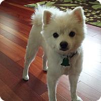 Adopt A Pet :: Munly - Chewelah, WA