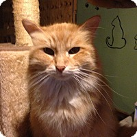 Adopt A Pet :: Wendy - Bridgeton, MO