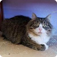Adopt A Pet :: Cricket - Raritan, NJ