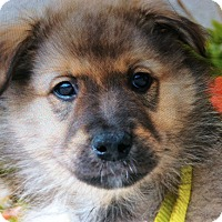 Mixed Breed (Large) Mix Puppy for adoption in Los Angeles, California - RUDY VON WUSTE