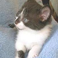 Adopt A Pet :: Kate - Miami, FL