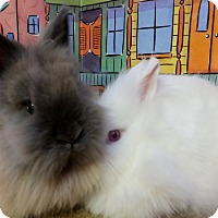 Adopt A Pet :: Curly and Moe - Foster, RI