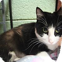 Adopt A Pet :: Oreo - Benbrook, TX