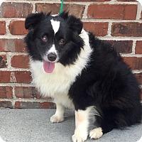 Adopt A Pet :: Cupcake - Mount Pleasant, SC