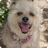 Adopt A Pet :: Scarlet - Newhall, CA